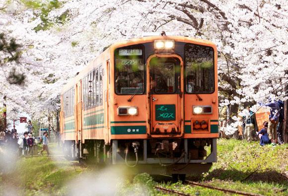 2017_0419sakura.jpg